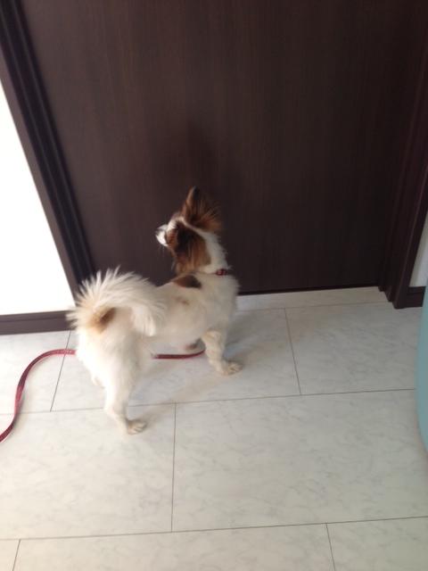 愛犬がドア前で首を傾げる写真