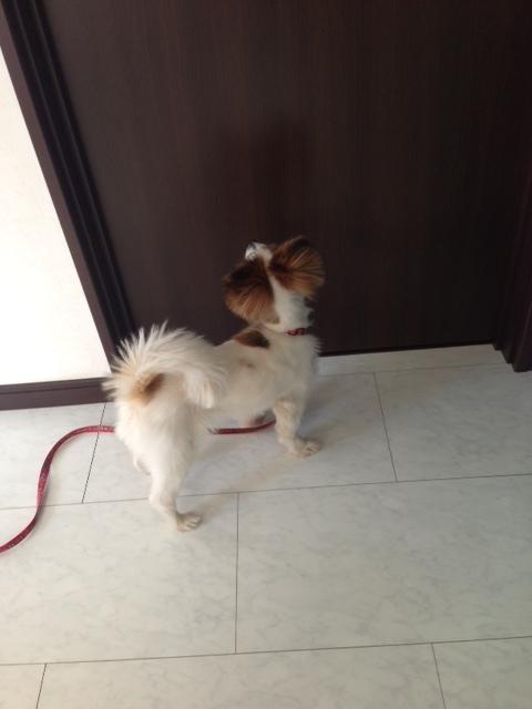 愛犬がドア前に佇む写真