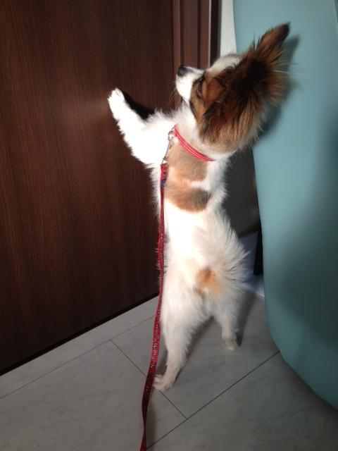 愛犬がドアに立ちはだかる写真