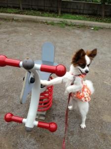 公園の遊具とパピヨンボク