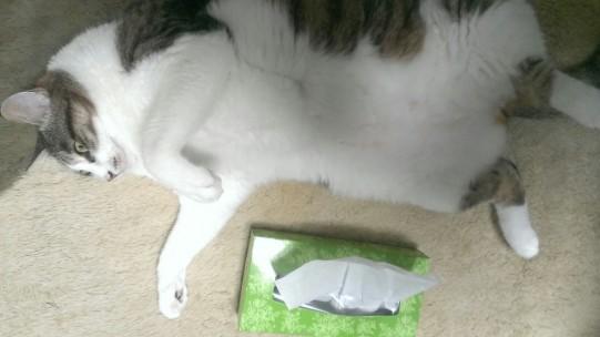 猫とBOXティッシュ