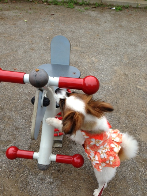 愛犬と公園の玩具
