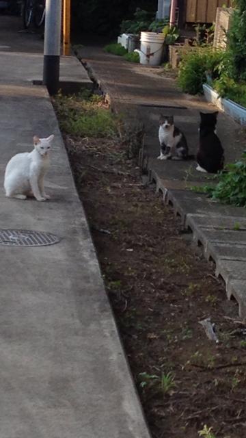 猫が3匹集まってる光景