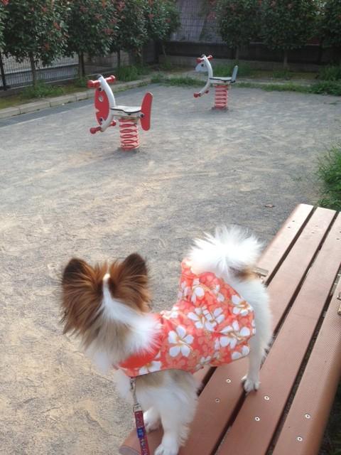 公園のベンチでたたずむパピヨン