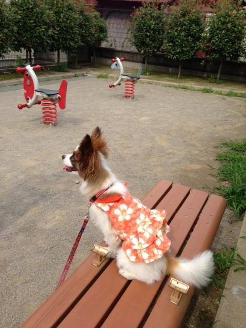 公園の玩具と並ぶ愛犬パピヨン