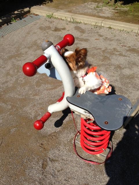 愛犬パピヨンと公園の遊具