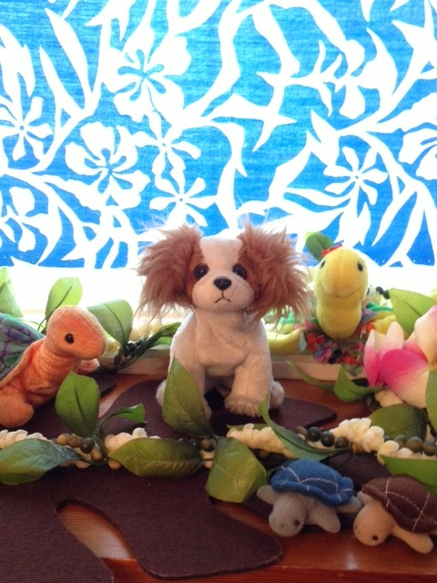 愛犬パピヨンと亀たち