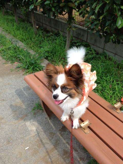 愛犬パピヨンと公園の玩具