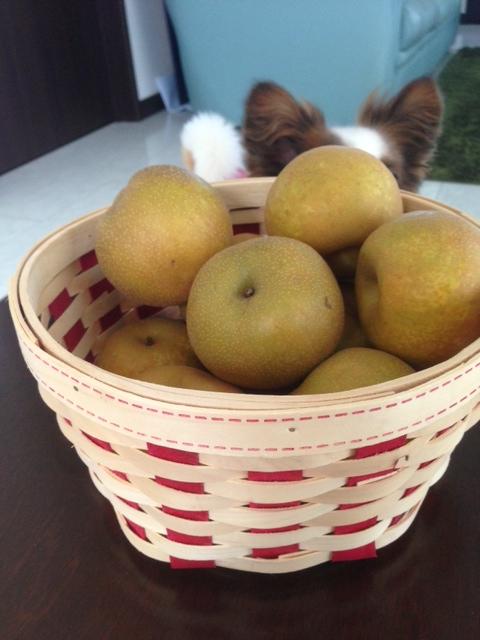 梨に隠れるパピヨン