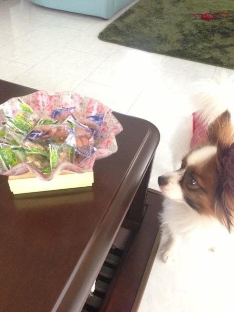 テーブル上をちら見するパピヨン