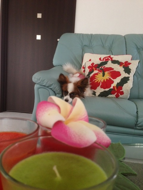 お花とパピヨン