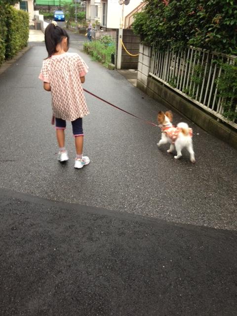 小さな女の子とパピヨンのお散歩
