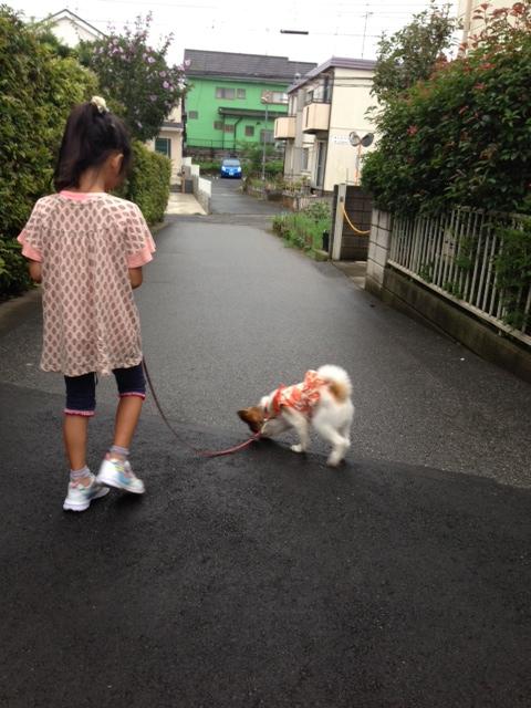 小さな女の子とパピヨンの散歩