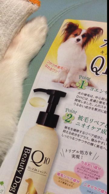 犬用シャンプーのモデルのパピヨン
