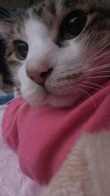 北の大地の美猫ユーちゃん