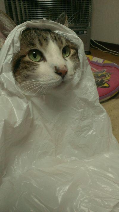 袋から顔を出す猫