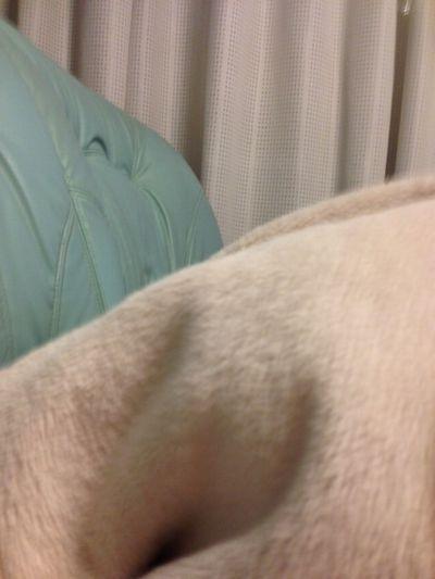 毛布野中のパピヨンボク